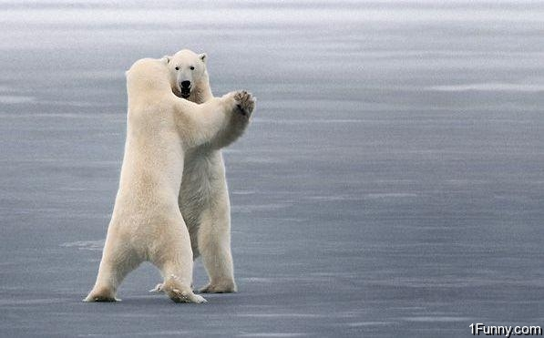 polar-bear-dance