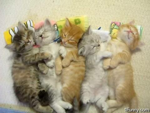 Two sleeping kittens — Stock Photo © azzzya #2322773