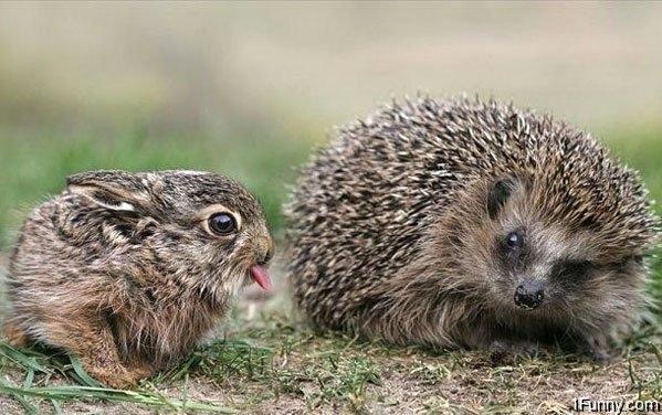bunny-hedgehog