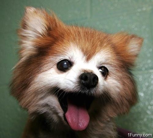 Happy Baby Fox – 1Funny.com