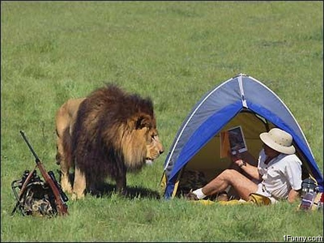 Lion Camping