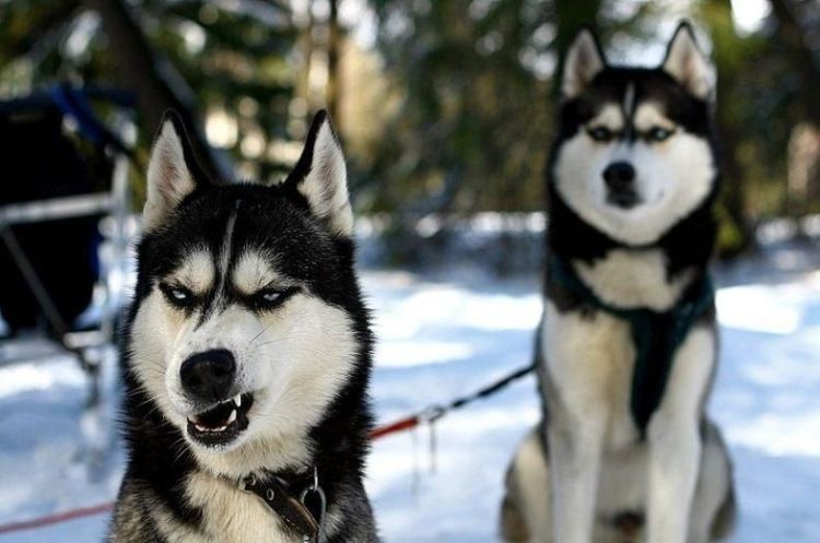 Annoyed Dogs Annoyed dog