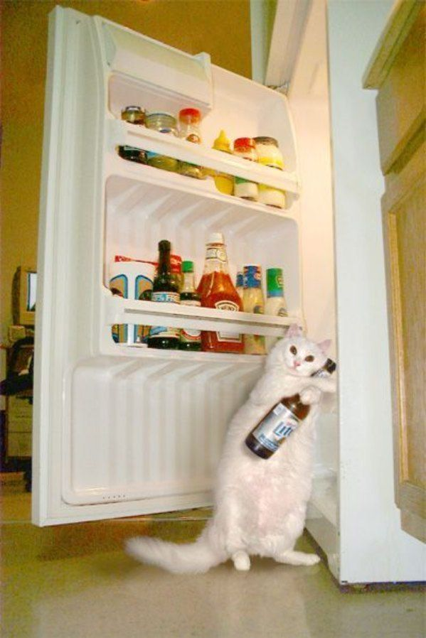 http://1funny.com/wp-content/uploads/2009/06/cat-fridge-beer.jpg