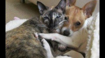 Dog Falls for Cat
