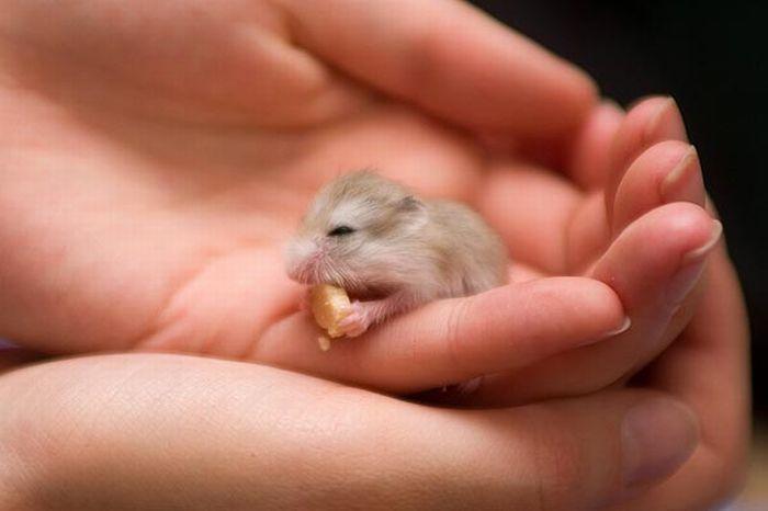 tiny hamster thanksgiving goddamn greatest thing