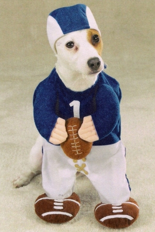 pet4_football_player