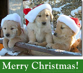 Merry Christmas Puppies.Adorable Christmas Puppies 1funny Com