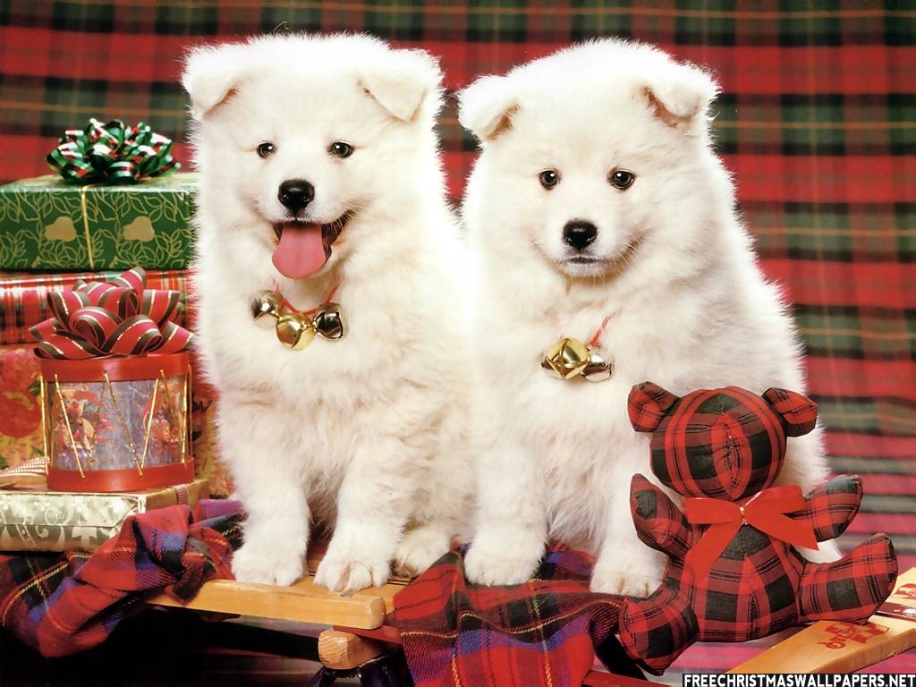 Adorable Christmas Puppies