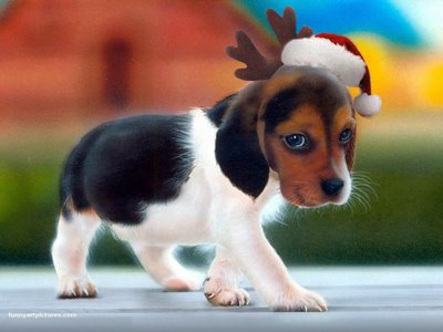 Adorable Christmas Puppies – 1Funny.com