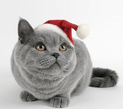 cats funny. christmas-funny-cat