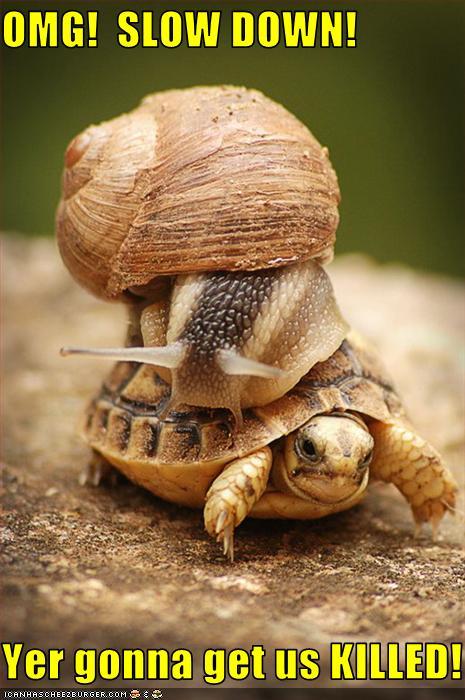 Turtles Funny Animal Memes