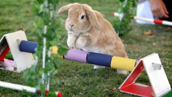 bunny hopp