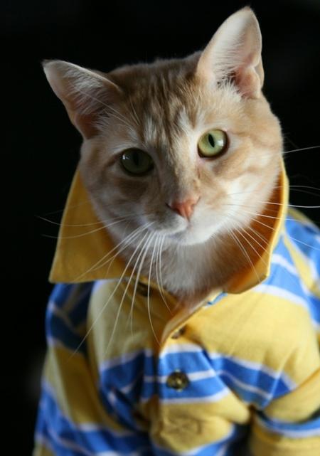 cat-shirt.jpg