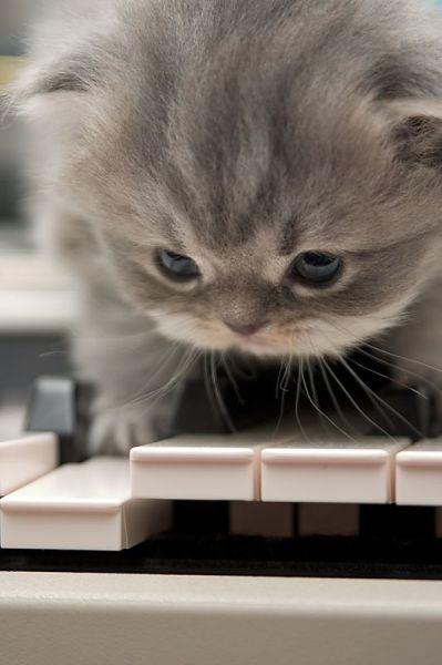 kitten-piano.jpg