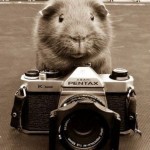 Guinea Pig Photographer