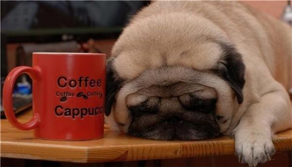 Need Coffee – 1Funny.com