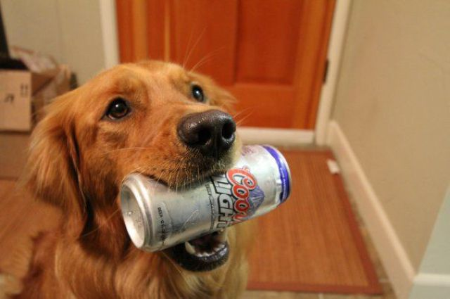 can dogs drink alcohol