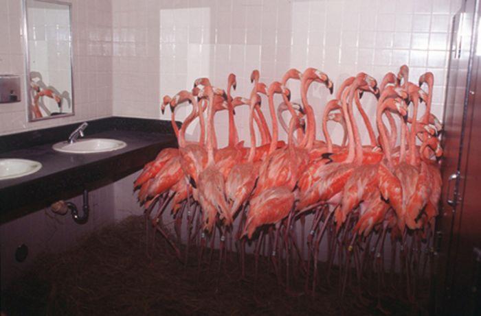 Flamingos In The Washroom