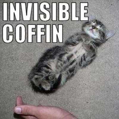 invisible cats � 1funnycom