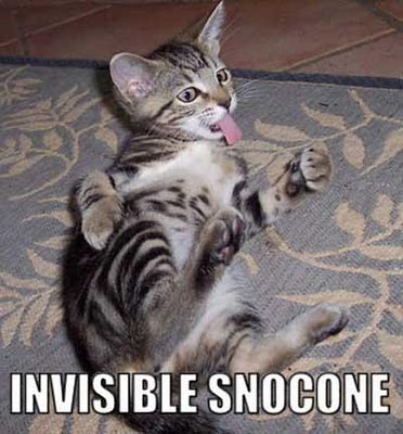 Invisible Bike Cat Gif