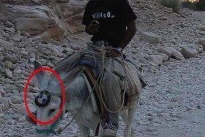 BMW-donkey