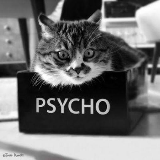 psycho-cat.jpg
