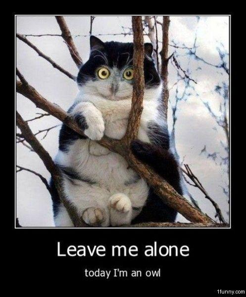 http://1funny.com/wp-content/uploads/2010/09/owl-cat.jpg