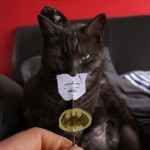 Batman Cat Costume