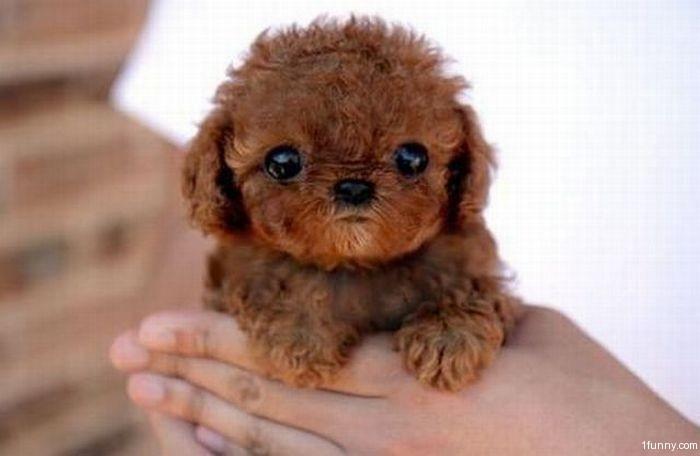 Cute Puppies – 1Funny.com