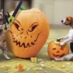 Pet Pumpkin Carvings