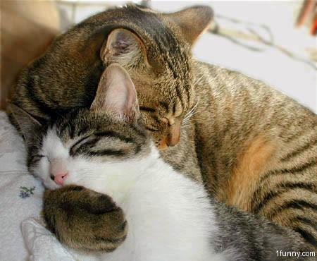 Cat Gives Hug To Dog