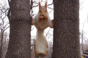 93_funny_squirrels