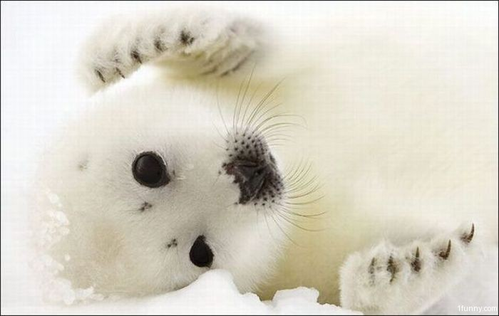 [Image: baby-seal.jpg]