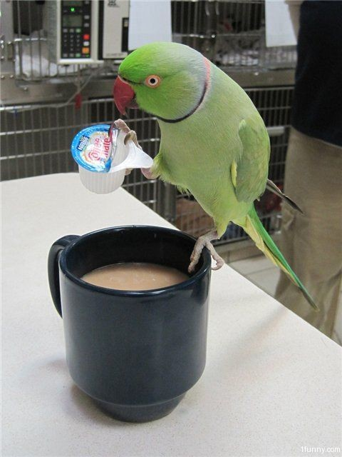 Parrot Coffee Mate – 1Funny com