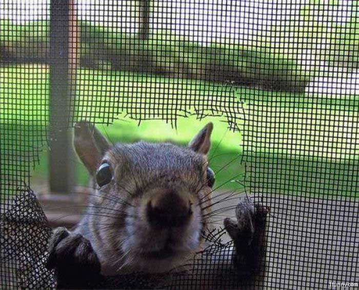 Squirrel Peek & Squirrel Peek \u2013 1Funny.com
