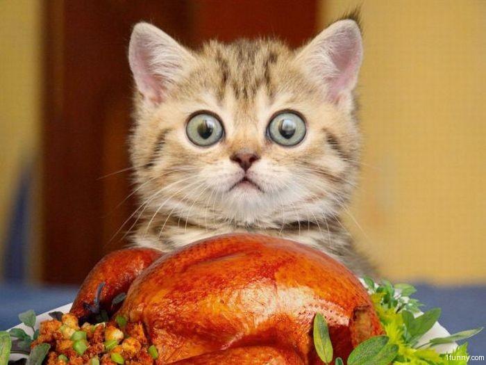 turkey-kitten.jpg