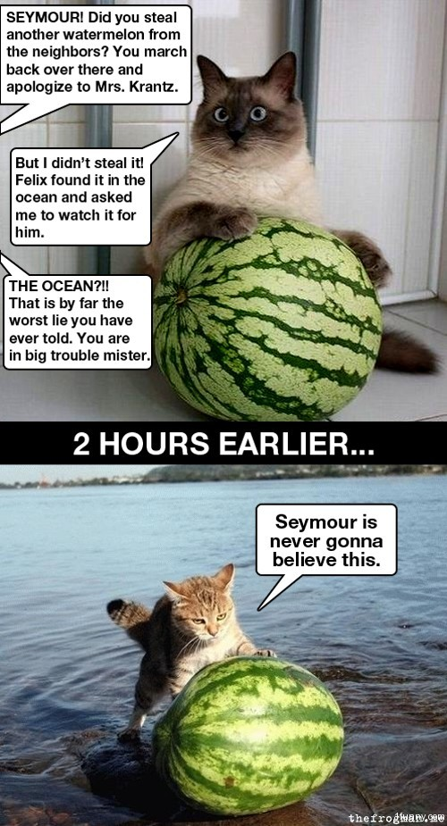 admin Pictures 4 cats , watermelonsLolcat Celebrate
