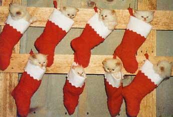 cute christmas kittens 26 pics � 1funnycom