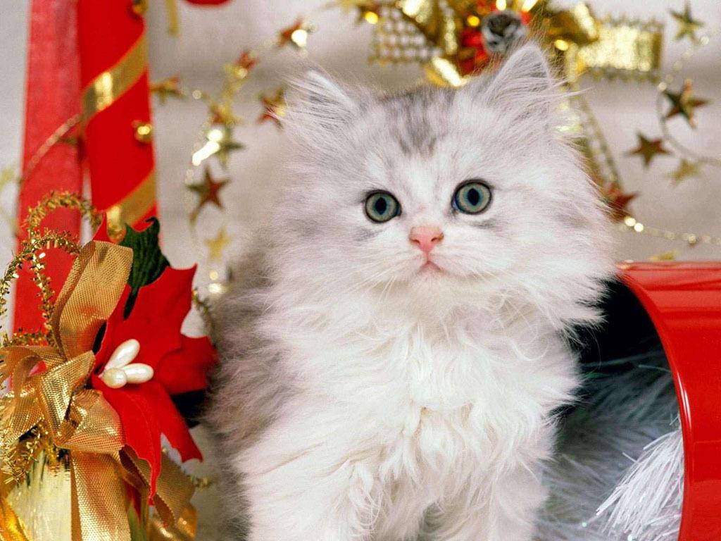 cute christmas kittens 26 pics u2013 1funny com