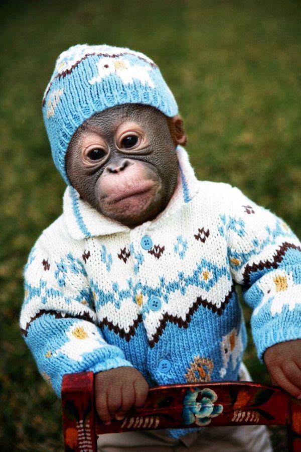 Baby Chimp – 1Funny.com