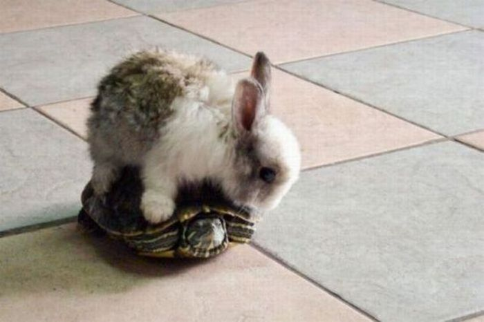 Y Wont My Turtle Eat Bunny on a Turtle – ...