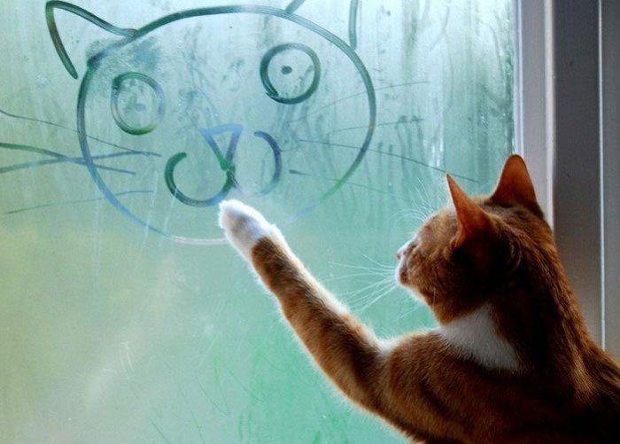 cat-window-art