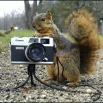 Squirrel Photographer 2