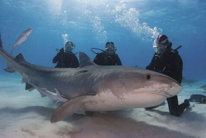 Big Shark 2 1Funnycom