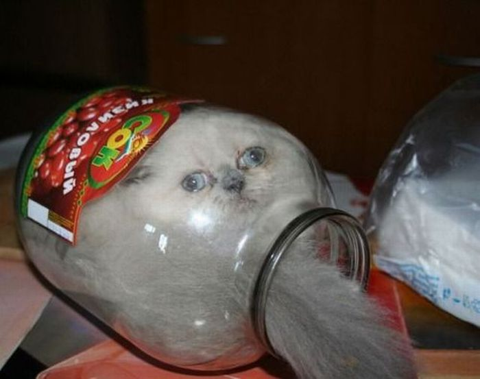 cat in a jar 1funny cat in 700x553