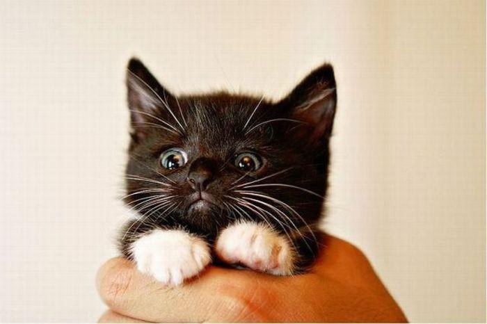 Sad Kitten – 1Funny.com