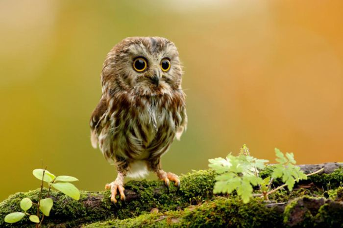 cute baby owl 1funny