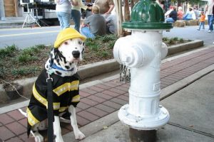 firefighter-dog