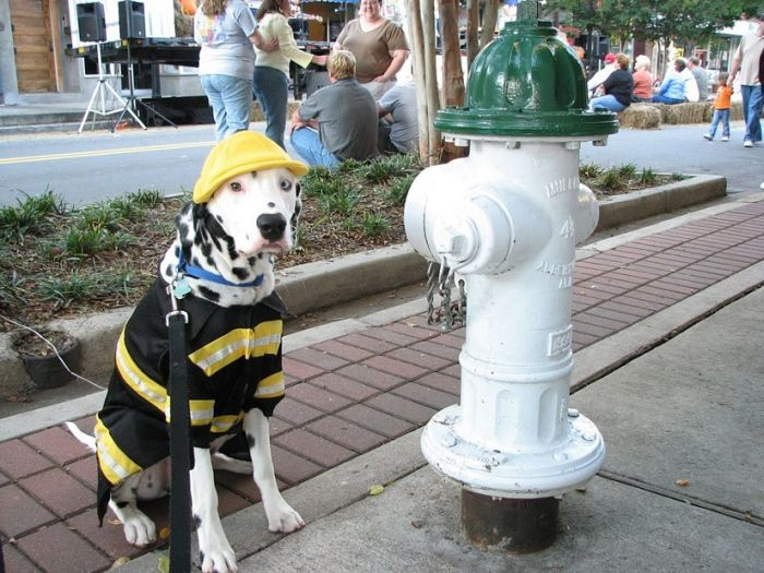 Firefighter Dog 1funny Com