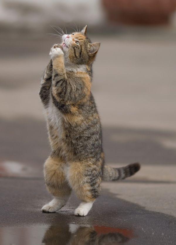 Nama Kucing Nabi Muhammad Saw Muezza Kucing Malas